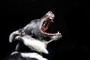 perro agresivo dominancia