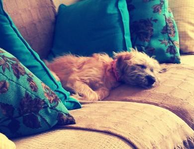 Trucos para que el perro no se suba al sofá