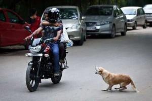 perro ataca moto