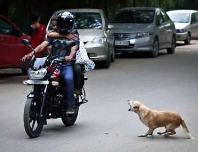 imagen ataca tu perro a vehículos en movimiento?