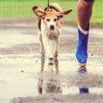Llueve. ¿Saco a mi perro?