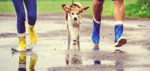 perro lluvia