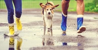 Pasear a mi perro en días de lluvia