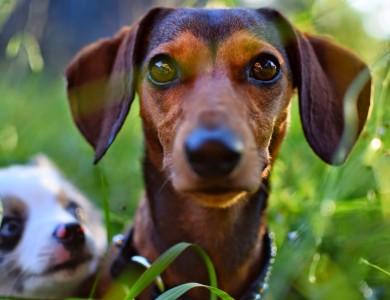 6 situaciones que tu perro puede predecir