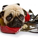 ¿Se aburre tu perro? Gran invento para combatirlo