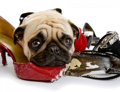 ¿Se aburre tu perro? Descubre este gran invento para evitarlo