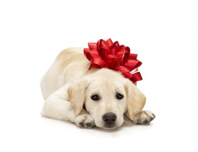 Regalar un perrito por navidad