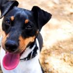 Aprende a fotografiar a tu mascota en 3 sencillos pasos