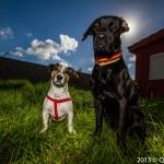El sol ¿Cómo afecta en el estado de ánimo del perro?