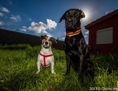 El sol ¿Cómo afecta al estado de ánimo del perro?