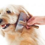 ¿Cepillar el pelo a tu perro es una torura para ambos? Averigua cómo solucionarlo.