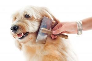 perro cepillado