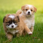 ¿En qué consiste la socialización del cachorro? Descúbrelo