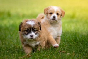 ¿Cómo socializar a un cachorro?