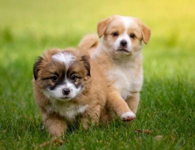 ¿En qué consiste una buena socialización de un cachorro?