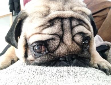 ¿Te sientes amenazado por tu perro?