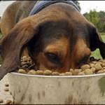 ¿Come tu perro tan rápido que le sienta mal? Tenemos la solución