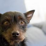 ¿La visita al veterinario es una pesadilla para tu perro? Resuélvelo