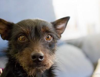 La visita al veterinario es una pesadilla para tu perro? Resuélvelo