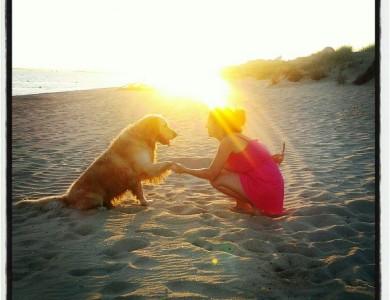 ¿Qué aporta un perro a la familia?