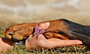 imagen 3 pasos para cortar las uñas a tu perro