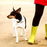¿Paseas a tu perro y todo es más interesante que tú?