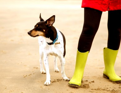 Paseas a tu perro y todo es más interesante que tú?