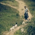 El paseo diario. ¿Recomendación u obligación?