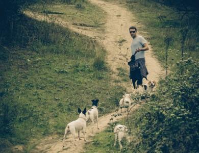 el paseo diario recomendación u obligación?