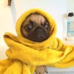 ¿Sabes cuál es la temperatura ideal del agua para el baño de tu perro? Descúbrelo