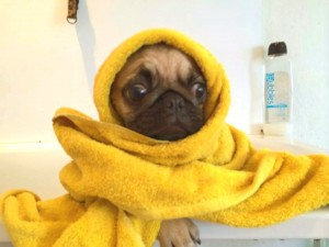 Sabes cuál es la temperatura del agua ideal para el baño de tu perro?