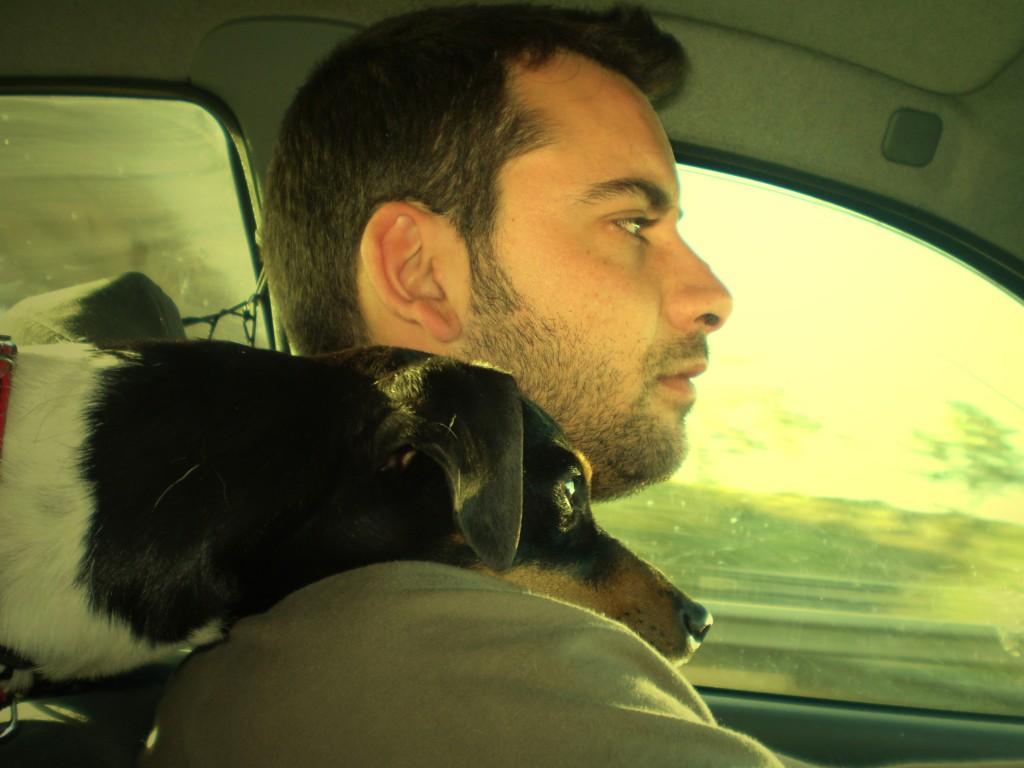 como viajar con perro en el coche