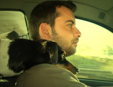 como no viajar en coche con tu mascota