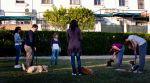 adiestramiento canino grupal sevilla