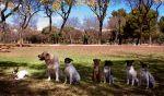 clase grupal adiestramiento perros