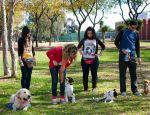 adiestramiento perros grupal