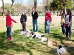clase grupal, perros quietos