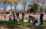 educación perros grupal
