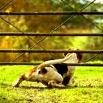 Perros escapistas