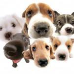 Curiosidades sobre comportamiento canino