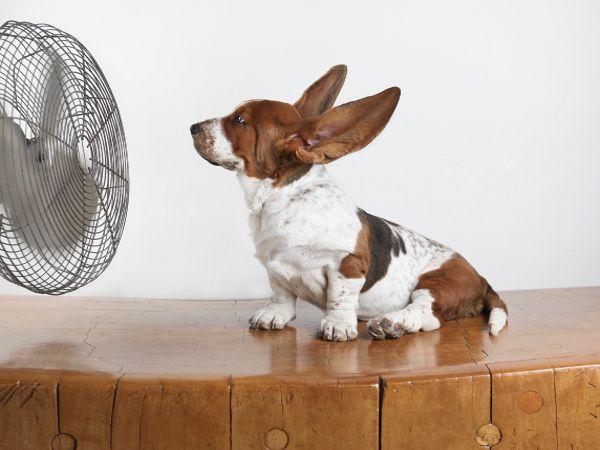 perro ventilador