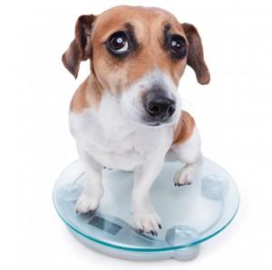 Como bajar de peso a tu perro
